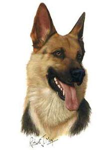 German shepherd dog robert may art greeting card set of 6 ebay image is loading german shepherd dog robert may art greeting card m4hsunfo