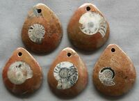 Interesting Moroccan Ammonite Fossil Jewelry Pendant Multiple Sizes Morocco
