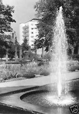 AK, Potsdam, Freundschaftsinsel, Partie Staudengarten mit Springbrunnen, 1966