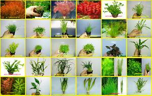 PLANTAS-DE-ACUARIO-GRAN-VARIEDAD-COMPRA-4-Y-TE-LO-ENVIAMOS-URGENTE-24-H