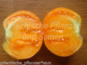 Tobolsk-Tomate-alte-Sorte-Russl-kaeltetolerant-10-Samen