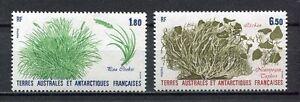 38628-French-Antarctic-T-1987-MNH-Plants-2v
