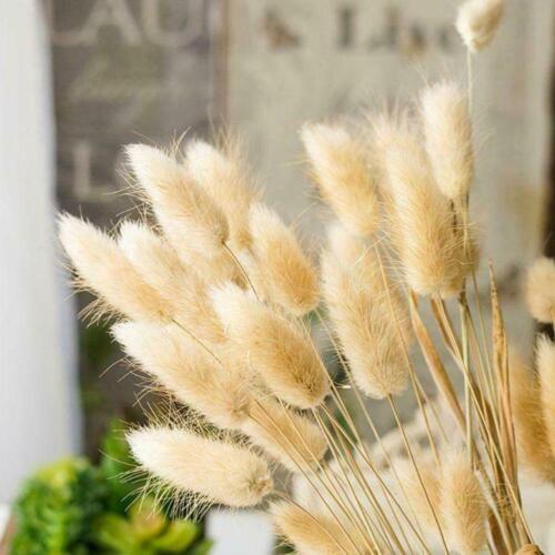 20PCS Natural Dried Flowers Bouquet Rabbit Tail Grass Bunch Home Decoration New
