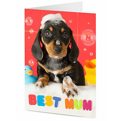 BEST MUM Dachshund puppy dog message Birthday or Mother's day card