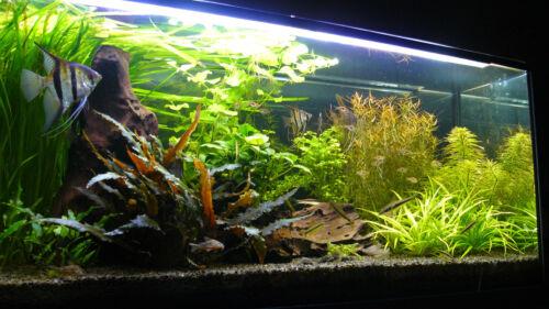 1-3mm 1 kg Negro Natural arena y grava de acuario Sustrato ideal para plantas