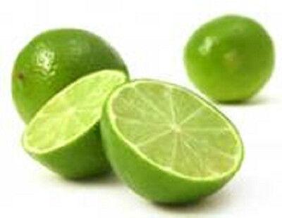1 Lime SubLime Dwarf Garden Plants Edible Citrus