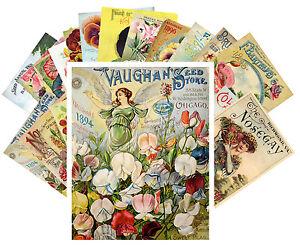 Postcards-Pack-24-cards-Flowers-Vintage-Seed-Pocket-Garden-Roses-CC1017