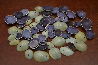 100 PCS DRILLED HOLE RING TOP COWRIE SEA SHELL BEADS CHARMS #T-428
