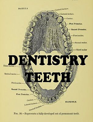 Vintage DENTISTRY dental dentists oral dentures gums teeth history 26 Books CD