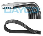 Dayco 5PK1030 V-Ribbed Belt