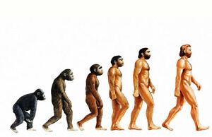 Impression-Encadree-The-Evolution-Of-Man-Image-Affiche-Humains-Homosapien