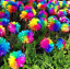 100Pcs-Rainbow-Chrysanthemum-Flower-Seeds-Rare-Colorful-Plant-for-Home-and-Field thumbnail 1
