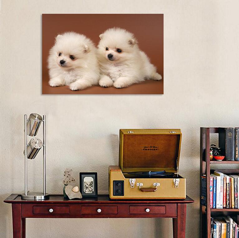 3D Zwei whitee Hund 53 Fototapeten Wandbild BildTapete AJSTORE DE Lemon