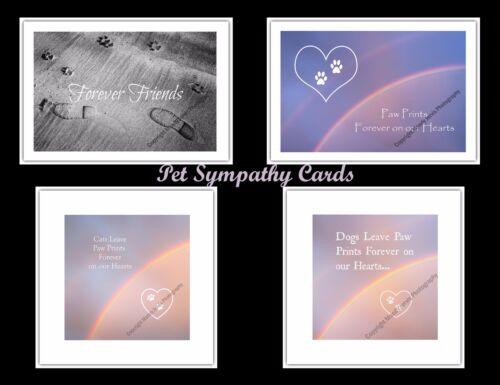 Blank Notelet Greetings Card Birthday Grey Seal Pup Donna Nook Wildlife