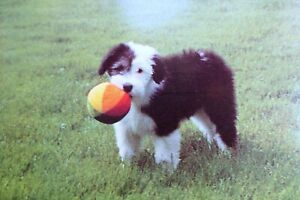 Greeting Postcard Animal Shelter North Shore League Dog Puppy with