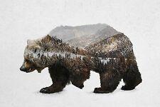 UNIQUE HIPSTER GIFT KODIAK BROWN BEAR ART PRINT nature forest bears 15x10 poster