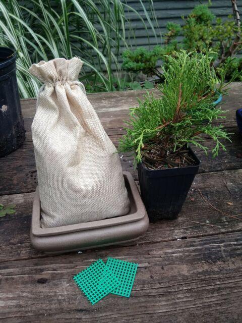 Bonsai Tree Starter Kit. Makes a great gift!