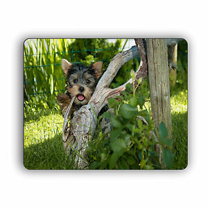 Yorkshire Terrier Waving Behind Tree Computer Mouse Pad