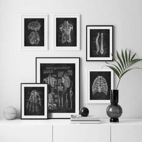 Human Anatomy body Wall Art Skeleton Medical Muscle System *Vintage Canvas Print