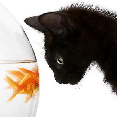 GLASBILDER DEKO WAND BILD DECO GLASS FLOAT GLAS GLASBILD TIER WELT TIERREICH