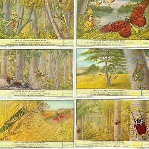 LIEBIG : S_1644 : 'Insectes géants du Congo Belge