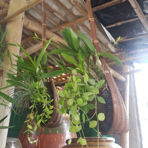 Bambou Pot Plante de Jardin Suspendu Tissé Panier à Plante Fleur Décor Orchidée 10 pcs