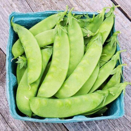 Gemüsesamen 20+ Samen Oregon Sugar Pod Zuckererbse Oregon Saatgut