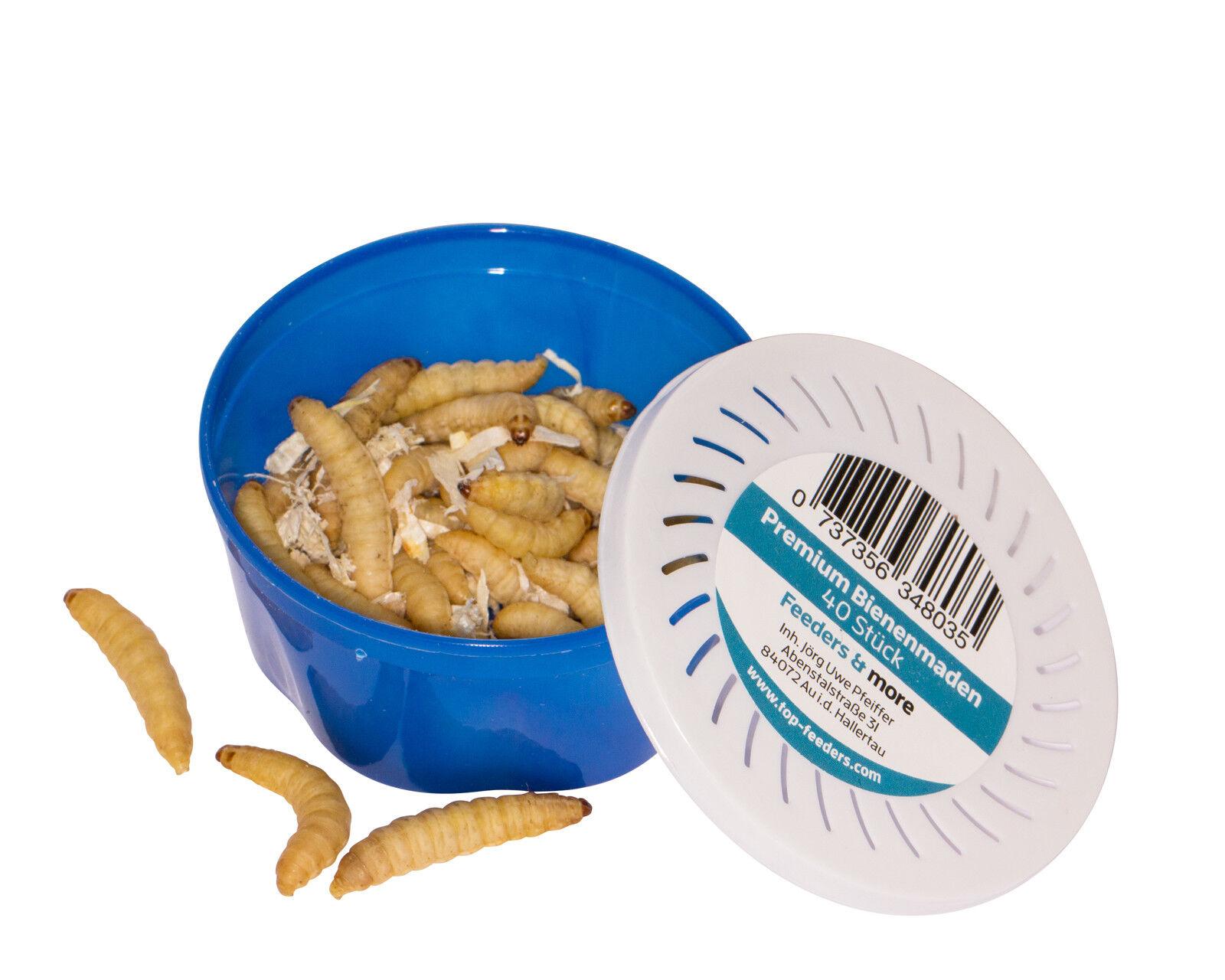 Bienenmaden, Wachsmaden, lebende Angelköder, Qualität vom Fachhändler    Ausgezeichnetes Handwerk