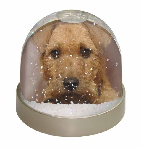 Lakeland Terrier Dog Photo Snow Globe Waterball Stocking Filler Gift, ADLT2GL