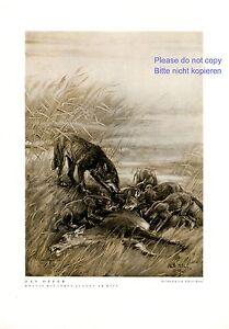 Das Opfer XL Kunstdruck 1932 von Albert Holz Wolf mit Jungen Hirsch Riss Jagd +