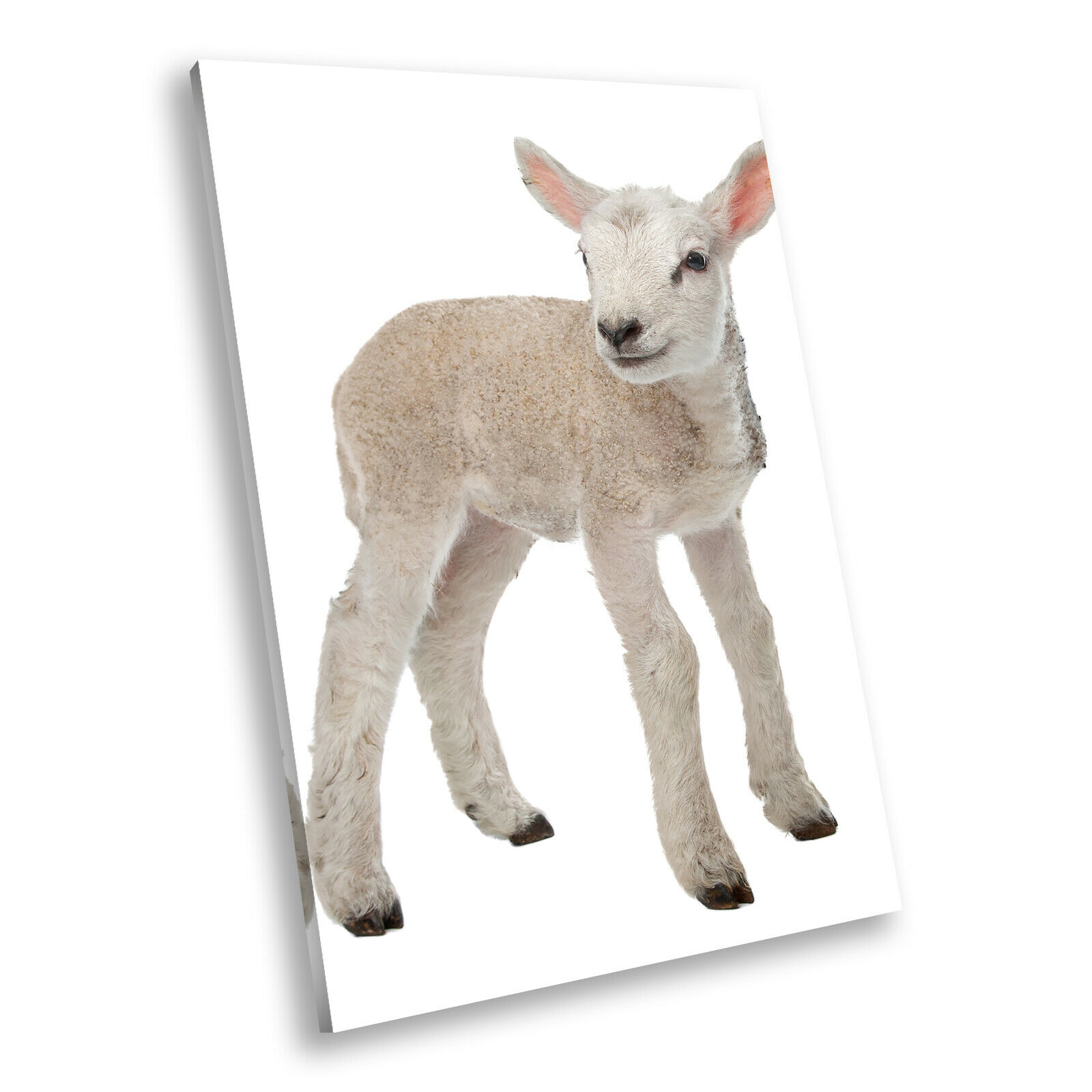 Farm Weiß Lamb Sheep grau Portrait Animal Canvas Framed Art Picture