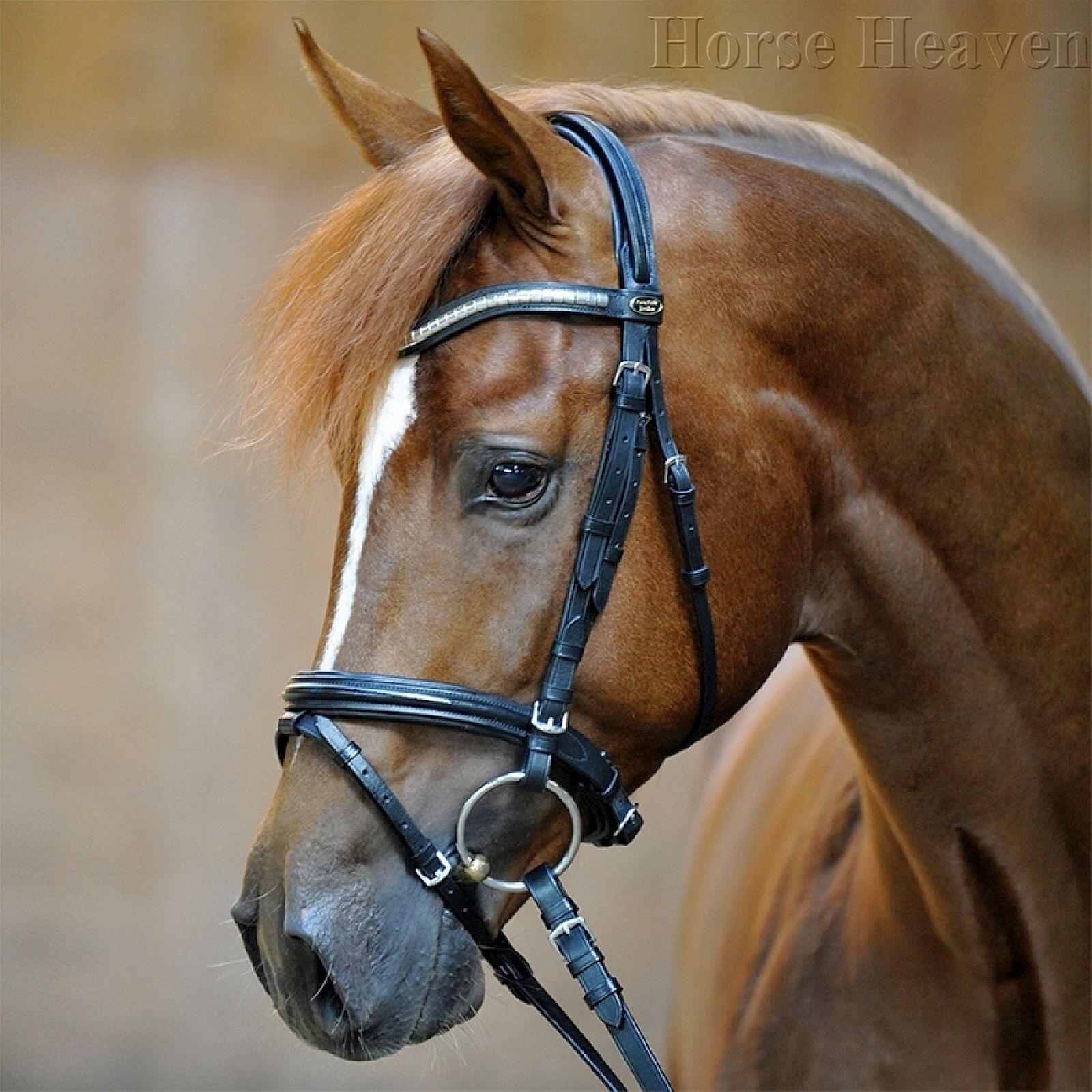 Kavalkade Polan Flash Snaffle Bridle Comfort Headpiece Shaped Clincher Browband