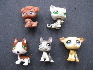 4-petshop-chien-et-un-chat