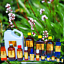 3ml-Essential-Oils-Many-Different-Oils-To-Choose-From-Buy-3-Get-1-Free thumbnail 91