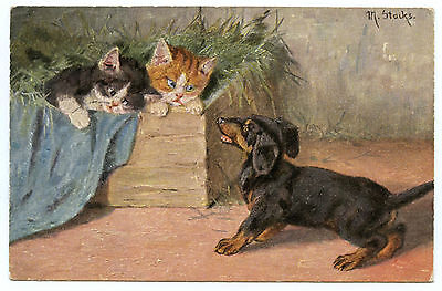 CHIEN TECKEL ET CHAT DOG DACHSHUND AND CAT