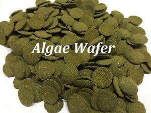 Gaufrette d'algues 6% Spiruline 100g à 3kg, P gratuit