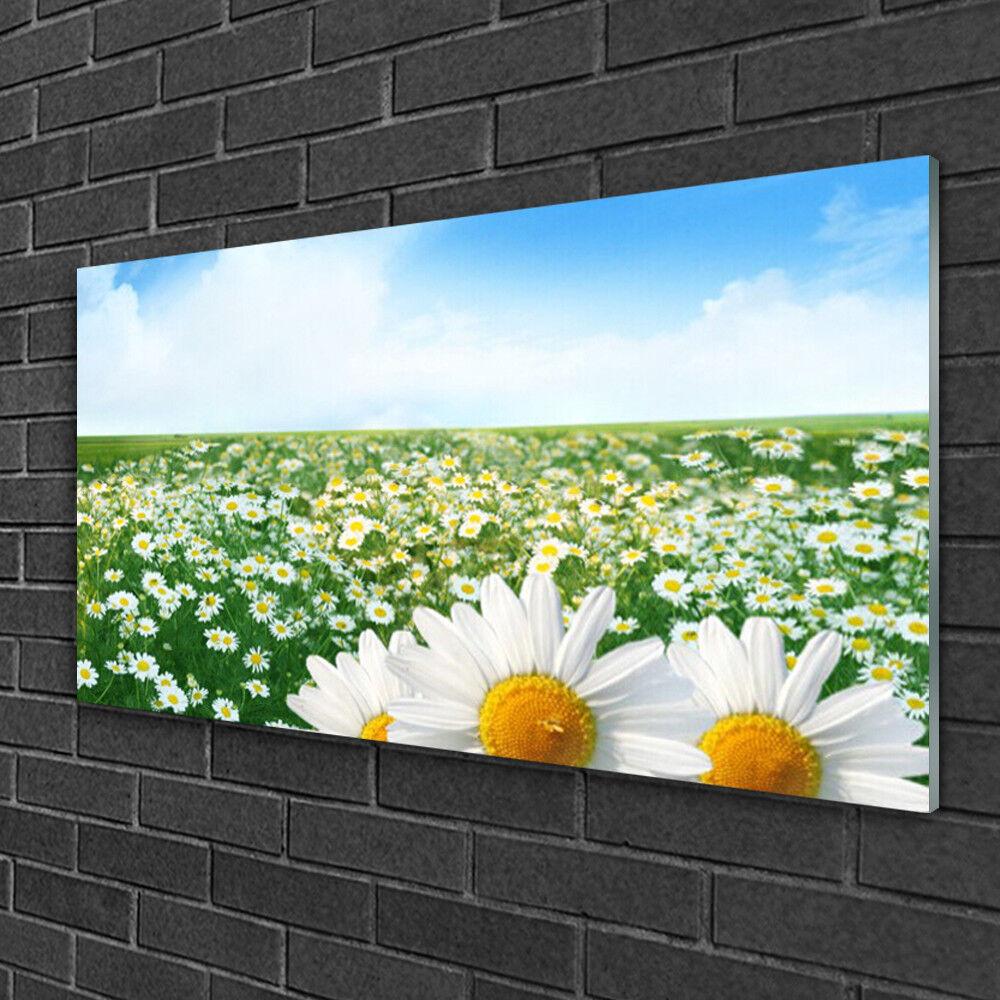 Image sur verre acrylique Tableau Impression 100x50 Floral Marguerite Prairie