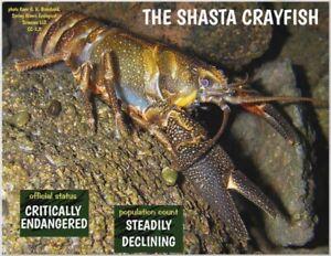 "The Shasta Crayfish, Endangered Species reminder by ""PostcardsTo SaveThePlanet"""