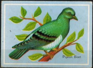 Image éducative - Pigeon Bizet - Moineau - Oiseau - Bird - Chromo - Réf.180
