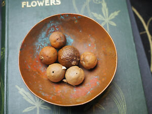 6-Oak-Galls-or-Apples-for-Spells-amp-Charms-Pagan-Wicca-Witchcraft-Magic-Ink
