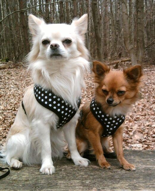 ♥ FED ♥ Hundegeschirr weich gefüttertes alvonja Softgeschirr in den Gr.XS - XL ♥