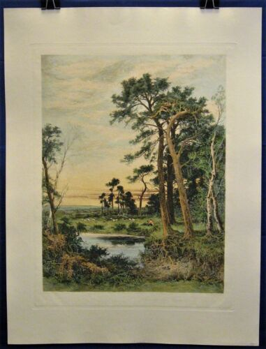 Among the Surrey Pine Trees Landscape - Engraving