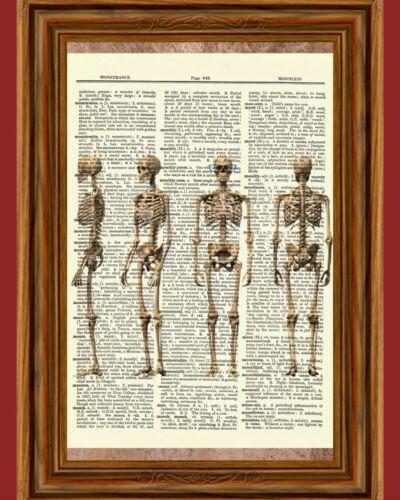 Skeleton Human Anatomy Bones Dictionary Picture Art Print Poster Skull Halloween