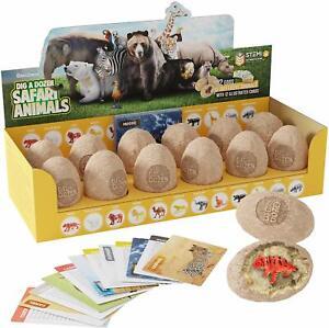 Safari Animals Eggs Dig Kit 12 Models Chisel Brushes Learning Cards Display Box