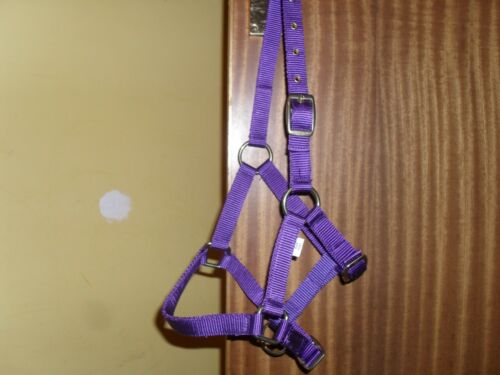 Mini Shetland Headcollar and Matching Rope 10 Colours Posted Out Very Next Day .
