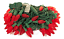 23FT-RED-LED-Christmas-Lights-C6-Green-Wire-Steady-Light-Holiday-XMASS-70L-23-039 thumbnail 2