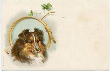 HELENA MAGUIRE. PORTRAIT DE CHIEN. DOG.
