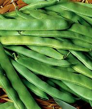 Bean Seeds, Roma II, Heirloom Bean, Italian Green Beans, Non-Gmo,  Tasty, 75ct