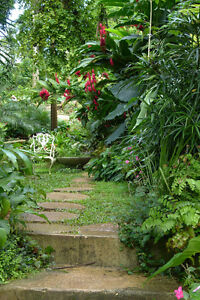 Charming Image Is Loading GUIDED MEDITATION TO VISIT A SECRET GARDEN CD