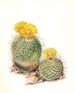 Vintage cactus print botanical print yellow flower ball cactus print image is loading vintage cactus print botanical print yellow flower ball mightylinksfo